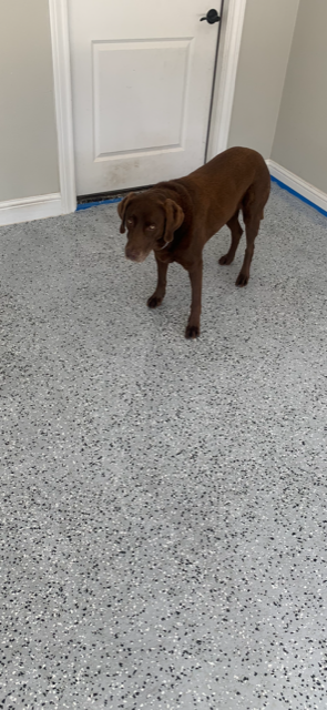 Brown dog walking on polyurea garage